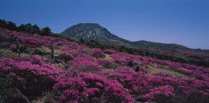 山頂が見える山は標高1950メートルの漢拏山