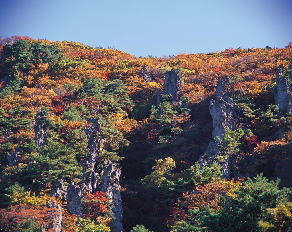 済州島の紅葉を楽しむ